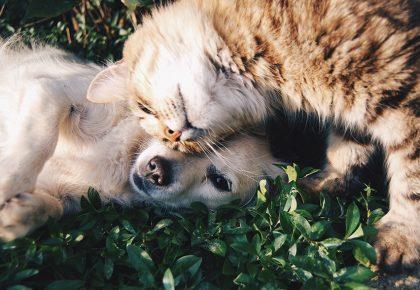 pies z kotem tulą się na trawie
