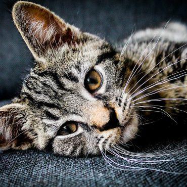 kot leży bokiem na kanapie