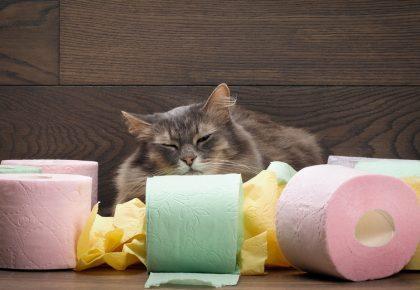Kot otoczony różnokolorowym papierem taletowym